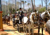 Cadiz Horse Fair