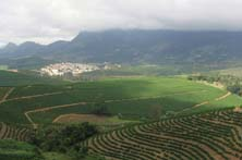 Coffee Plantation in Heredia